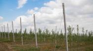 Интенсивные яблоневые сады Ингушетии дали первый урожай